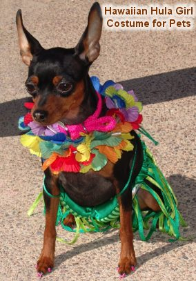 Instructions for making Pet Hula Girl Halloween Costume